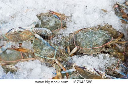 fresh flower crab or Blue crab or Blue swimmer crab on ice in fish market