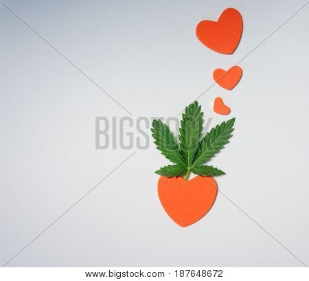 cannabis leaf on a light background and red hearts