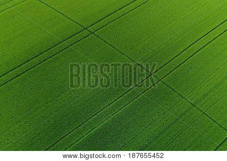Green Wheat Field As Background