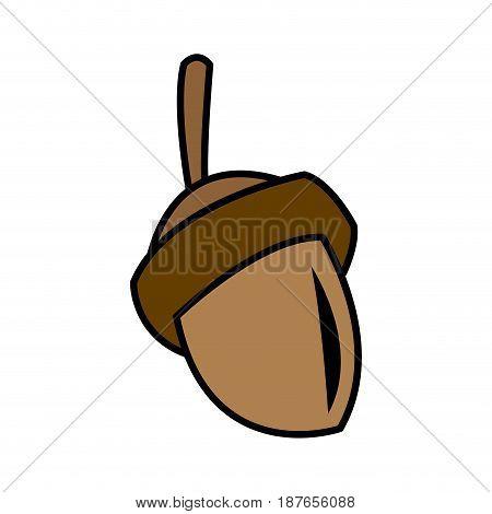 acorns oak nut, nature seed botanical vector illustration