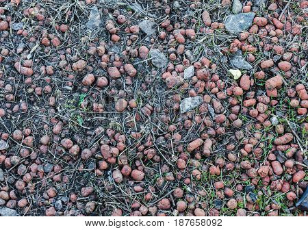 Expanded Clay Aggregate Grow Rocks Horizontal image
