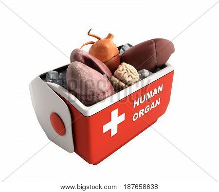 Organ Transportation Concept Open Human Organ Refrigerator Box Red 3D Render On White No Shadow Back