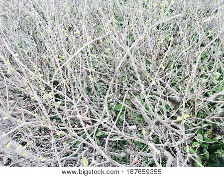 Ecology & Environmental Concepts Stem of Bare Twig with Little Green Leaves on Tree Branches.