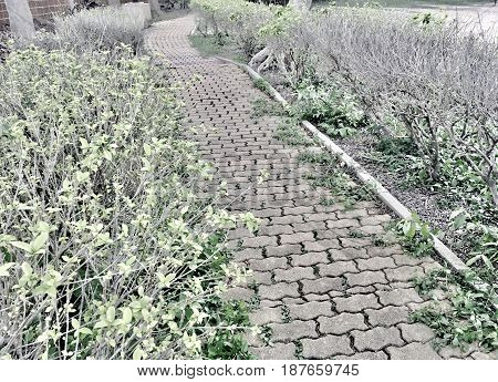 Wide Path of Paver Bricks Pavement or Walkway in A Garden Park for Walking Along.
