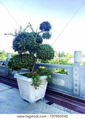 Houseplant Fresh Green Beautiful Bonsai Tree in A Flowerpot for Building Decoration.