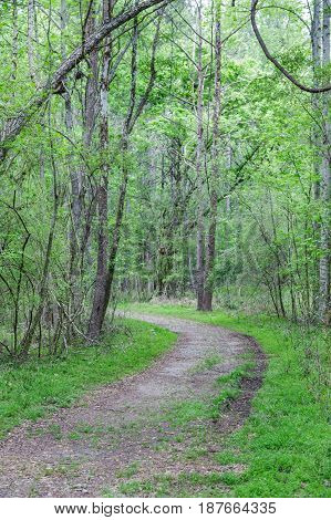 A dirt trail through a lush green forest in the spring