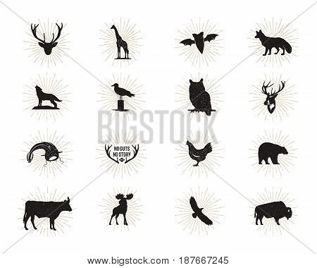 Set of wild animal figures and shapes with sunbursts isolated on white background. Black silhouettes wolf, deer, moose, bison, eagle, seagull, cow, and owl. Animals shapes bundle. Vector.