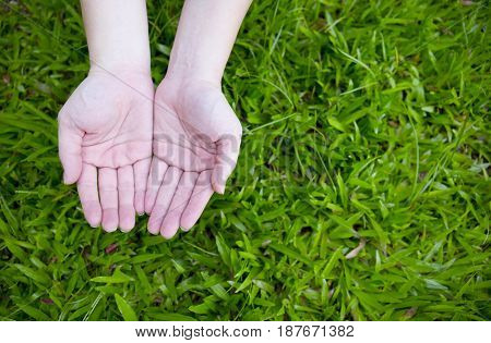 Two hands begging with green grass background.