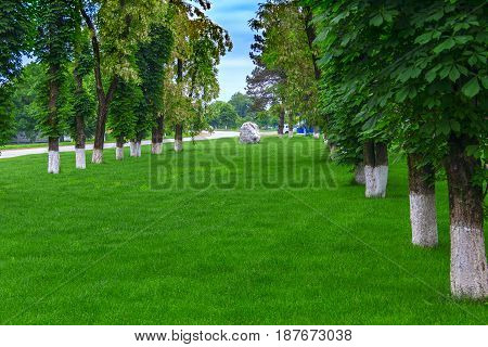 The avenue covered with a green grass on the parties of which trunks of trees stand in a row, and the big splinter of the marble rock is established at the end.