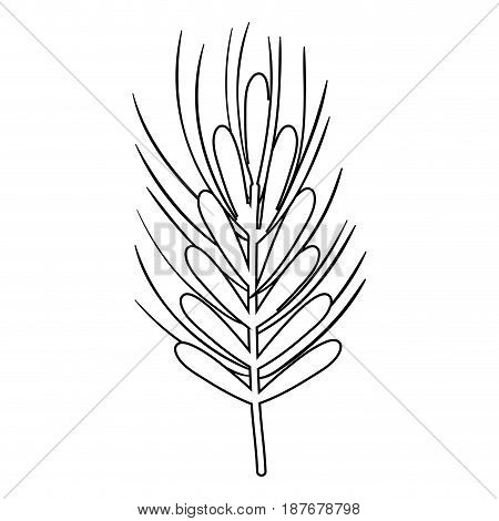 silhouette healthy wheat organ plant nutricious, vector illustration