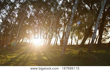 beautiful sunset and shadows from the trees in a park