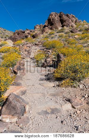 Dirt Trail Climbs Up Stairs In Desert