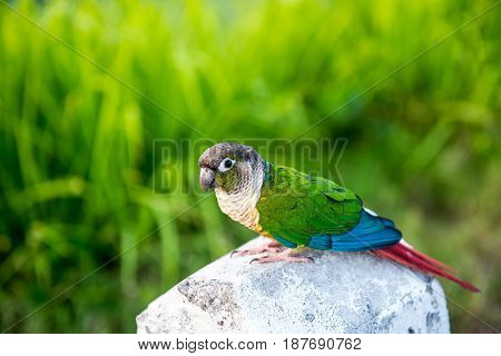 Parrot lovely bird animal and pet in the park