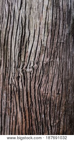 wood background and nature texture and wallpaper
