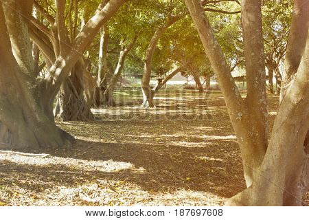 Natural park with trees and interesting root systems in the late afternoon sun