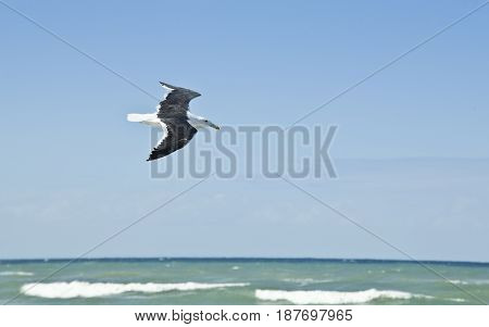 Lonely seagull flying over the sea on a hot summers day