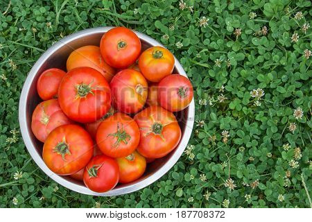 bowl of red tomatoes on the grass top view
