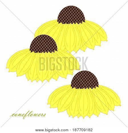Yellow coneflowers for decorated on white stock vector illustration