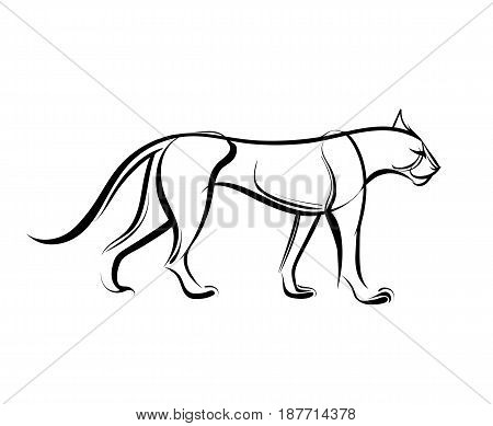 Big wild cat. Cheetah. Vector illustration. Linear black and white drawing.