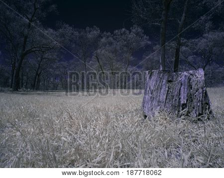 infrared forest with tree stump in foreground