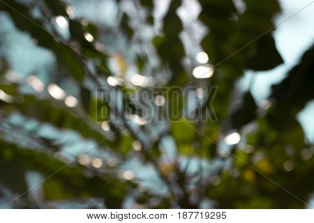 Abstract bokeh of lights on background, beautyful