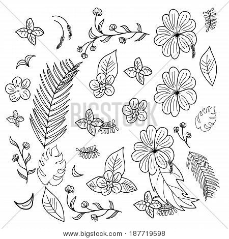 Hand drawn flowers and branches and leaves of tropical plants.