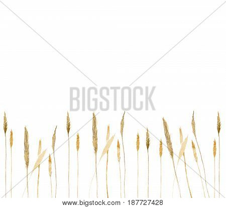 Watercolor border made of hand-drawn wild rye wheat isolated on white background