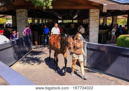 Lexington, KY, USA - 09/14/2016: Thoroghbred horses being lead to the auction room at Keeneland racecourse in Lexington Kentucky