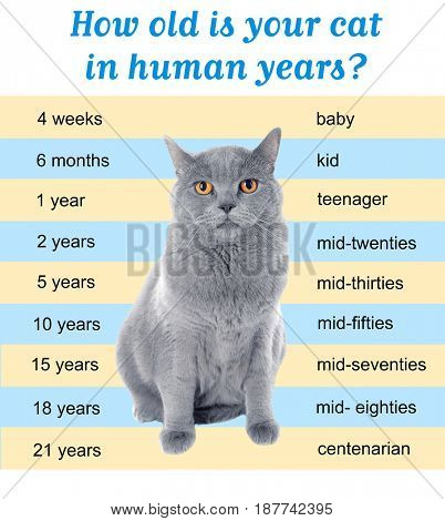 Pet age concept. Comparison chart of cat and human years as background