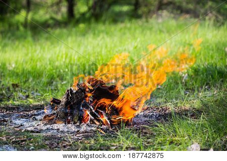hot flames of campfire on green meadow