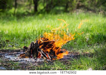 hot fire among green grass on summer meadow