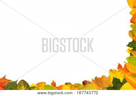 Background for text with many autumn leaves as half frame