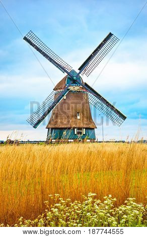 Old Dutch mill with yellow wheat at blue white cloud Netherlands summery landscape.