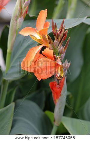 An orange flower of kreta plant plant smells the garden