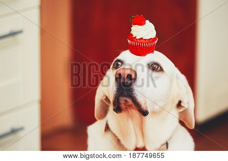 Cute Dog With Cupcake