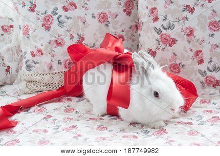 White rabbit in a graceful red ribbon. Pet animal.