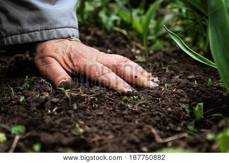 A female old hand on soil-earth. Close-up. Concept of old age-youth life health nature.