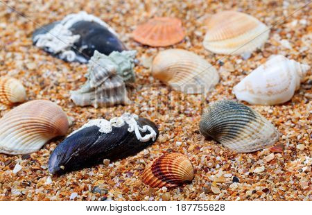 Seashells on sand in sunny day. Selective focus.