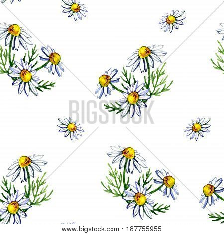 Seamless pattern with watercolor camomile flowers and petals