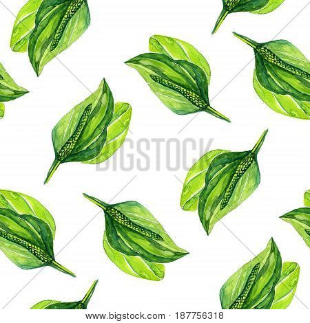 Hand drawn watercolor botanical illustration of the plantain plant. Plantain drawing isolated on the white background. Medical herbs illustration, herbarium. seamless pattern