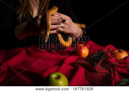 The Snake Descended From The Hands Of The Witch And Sank Over The Table With Apples And Feathers