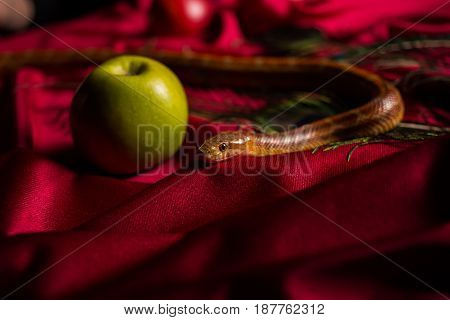 Evil Snake On The Table With Apples