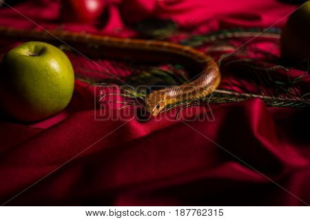 The serpent tempter on the table with apples