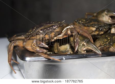 Crab on tied ready to sale in seafood market