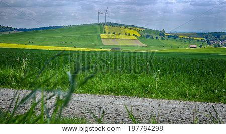Germany - Yellow Fields in Lower Saxony