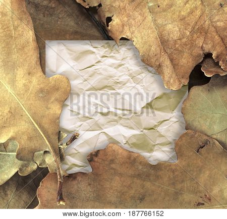 Blank page note card and dry oak leaves. Autumn nature design.