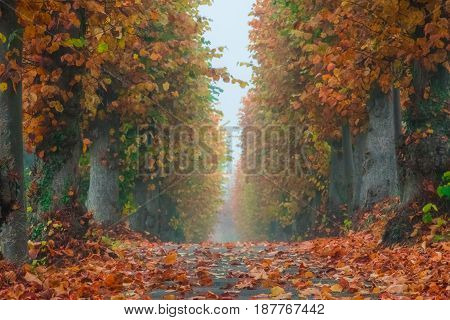 Pathway in a park photographed in autumn
