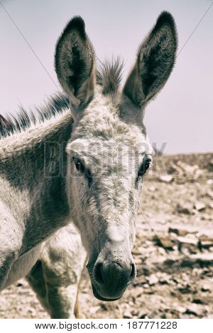 A Donkey Waiting For The Tourist Near   Mountain