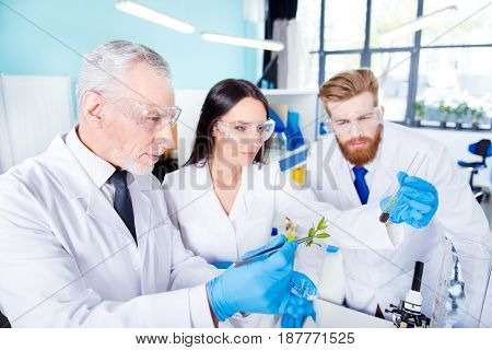Team Work Concept. Three Workers Of Laboratory Are Ckecking The Analysis Of The Sample Of Plant. The