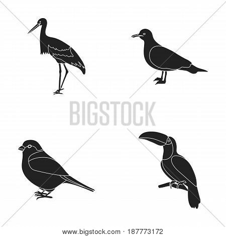 A stork, a seagull and various species. Birds set collection icons in black style vector symbol stock illustration .